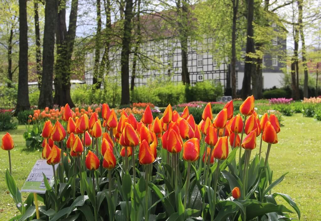 Frühling Tulpenshow im Gräflichen Park