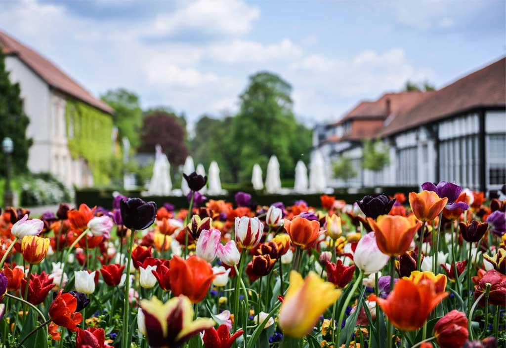 Früehlingsblumen und Tulpen im Gräflichen Park
