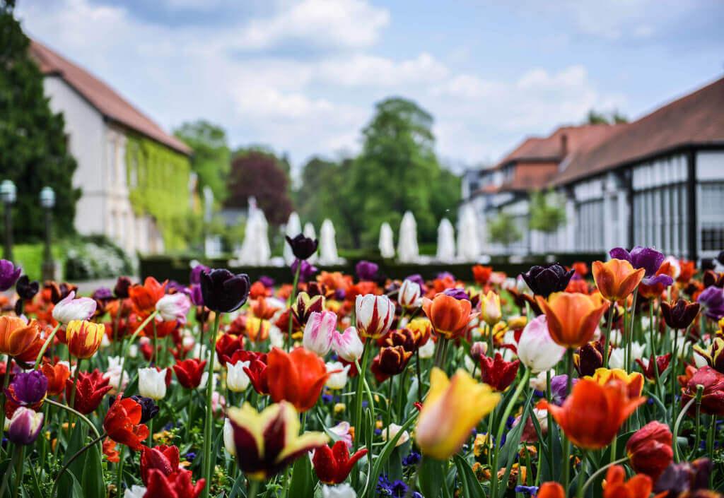 Tulpen im Frühling im Park