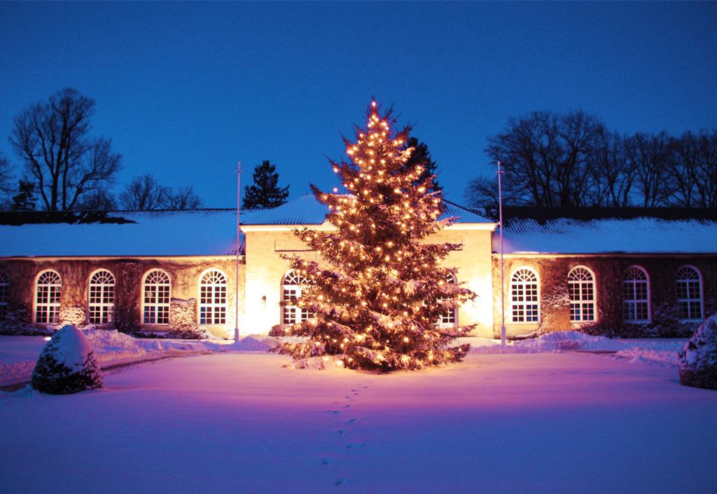 Weihnachtsbaum im Gräflichen Park